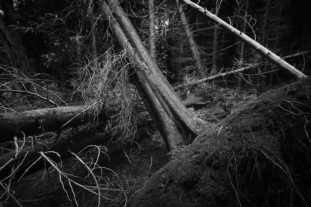 Dowdeswell Wood