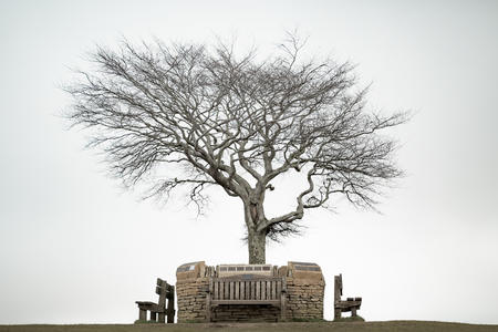 Tree and bench - Cleeve Common