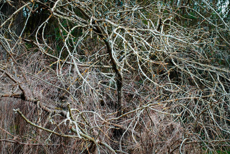 Woodland edge. Tree branches