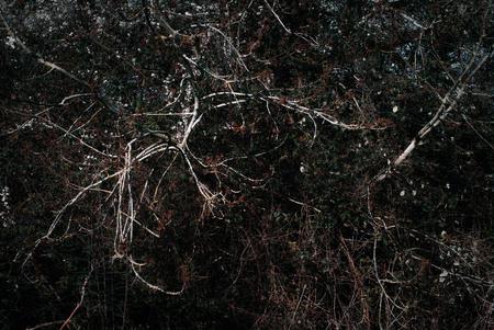 Woods edge. Fighting for light