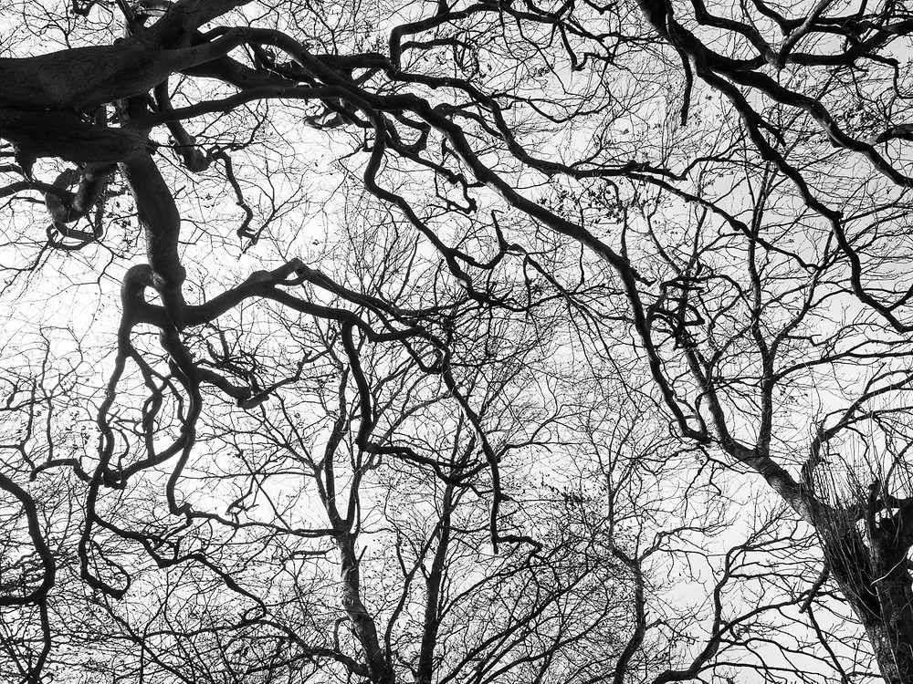 Tree branches, veins and arteries.