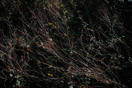 Woodland plants and vegetation