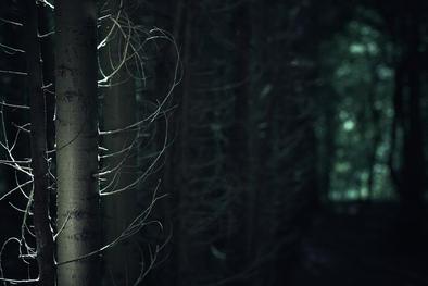Sunlit conifer trunk in dark woodland. Dowdeswell wood