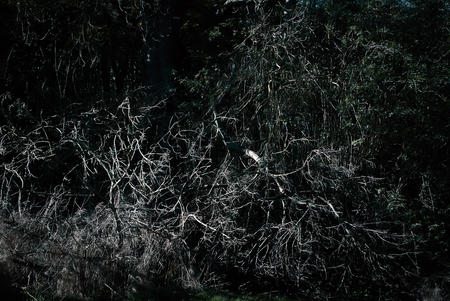 Tangled mass of branches and plants