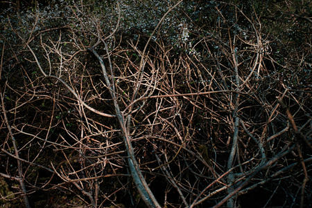 Branches.