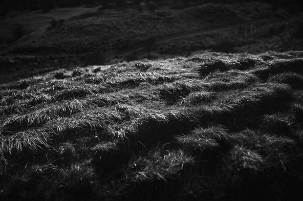 Cleeve Hill Edge