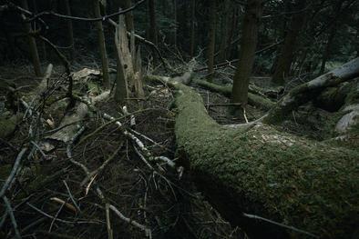 Fallen tree trunks in dark woods.