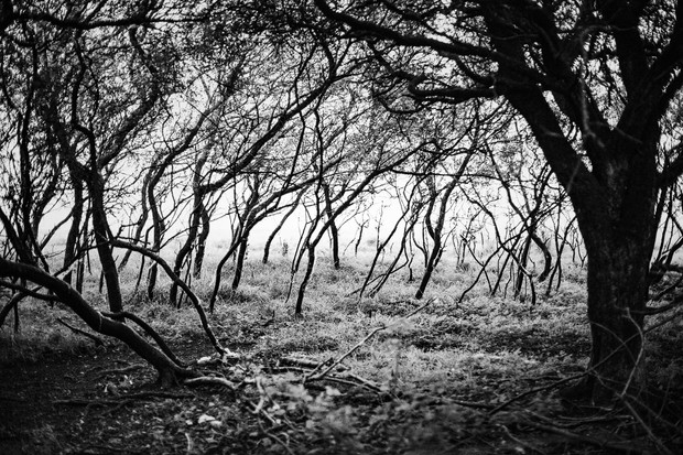Cotswold Woodland