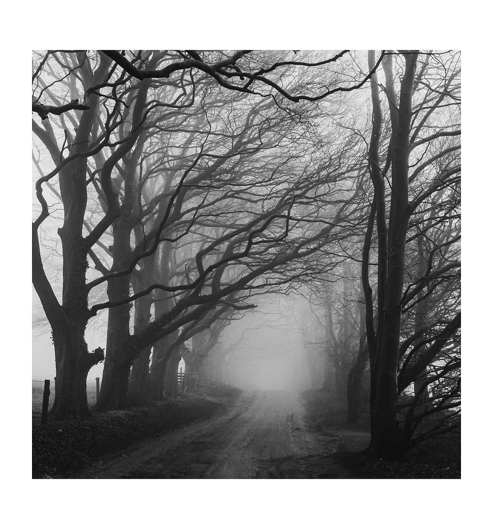 Black and white photograph of a tree lined foggy country land in the Cotswolds.