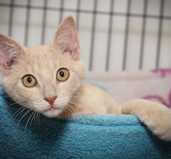 Cat Haven | Animal Shelter | Baton Rouge