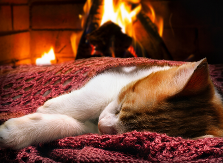 Fire Safety & Pets
