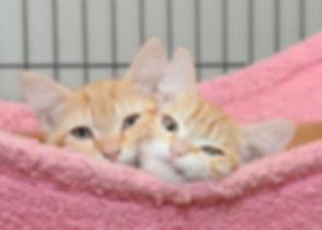 12 08 2019 Kittens.jpg
