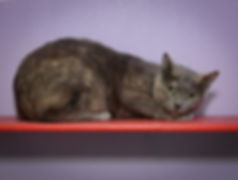 Thanks to the _petfinderfoundation New Year, New Home adoption grant, Cat Haven is reducing the adop