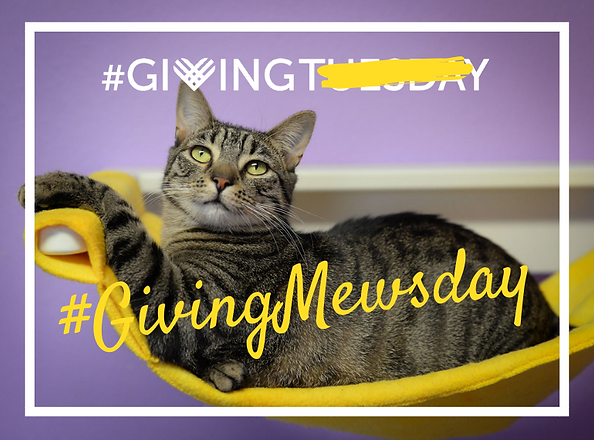 #GivingMewsday.png