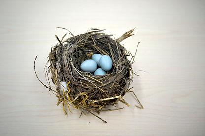 nest-1179492_1920.jpg