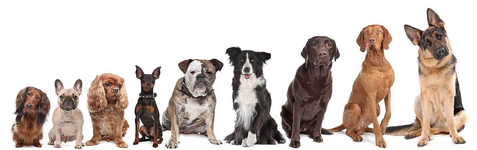 Gardner Dog Training, Sylvania OH