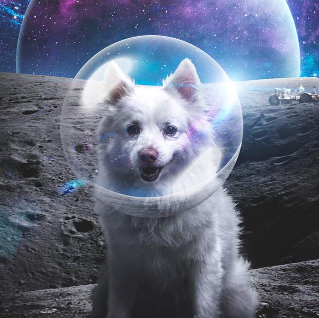 Penn Masala Interstellar