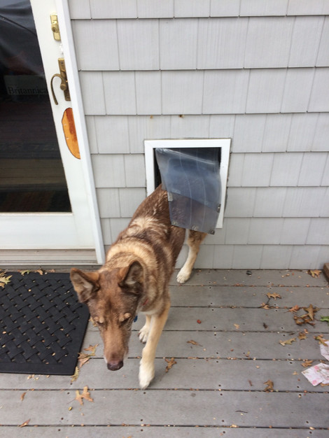Convenient Dog Door In A Permanent Location Phoenixrenovationllc
