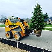 Tree Installation