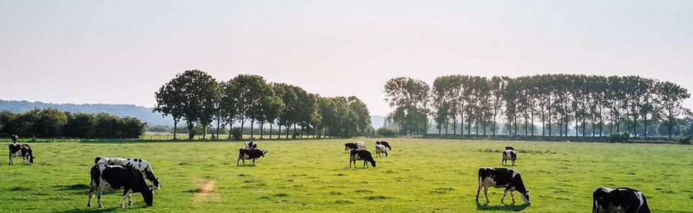 Animal Feed Machines