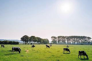 馬や牛を吸血する「サシバエ」を、薬品を使わず粘着シートで誘引捕虫するTトラップやワクモを殺虫剤を使用せずに珪藻土を使用して撃退するバグフィクサーを販売中