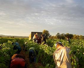 Harvest Bergerie_small.jpg