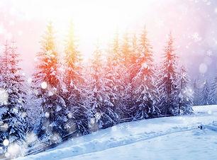 SnowPines.jpg