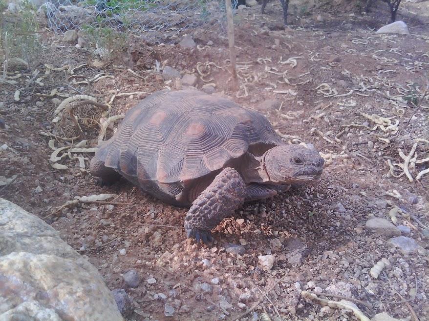 tortoise picture