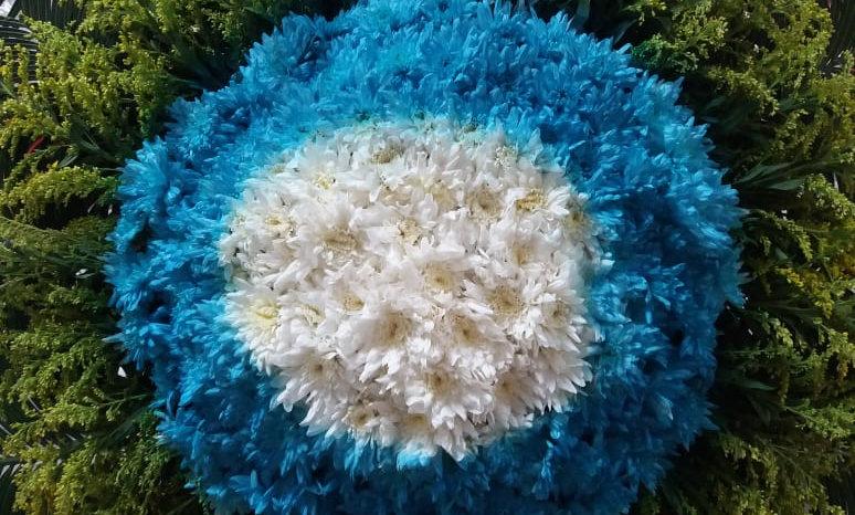 Coroa - Flores do campo