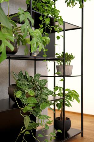 oxygen at work office plants, plant shelves. Büropflanzen im Regal wird zur pflanzenwand im büro.