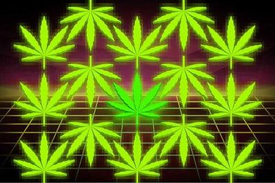 blockchain-for-cannabis-768x512.jpg