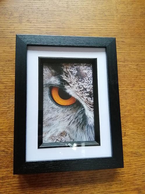 Rosie Owl Wisdom - Box Frame