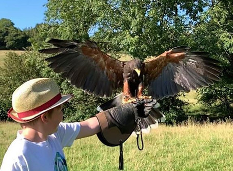 Falconry Club starting in March