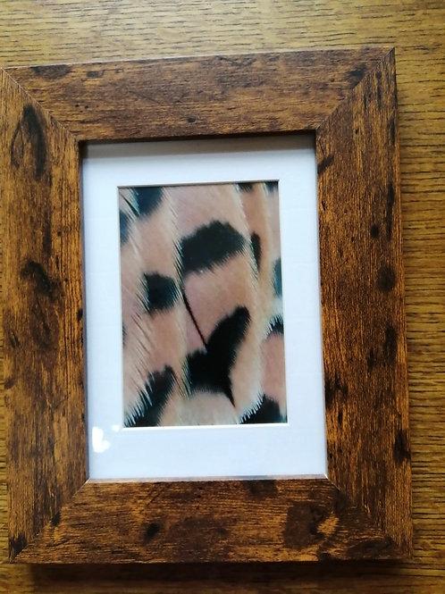 Kestrel feathers close up
