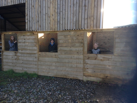 Aviaries almost finished & Avian Flu