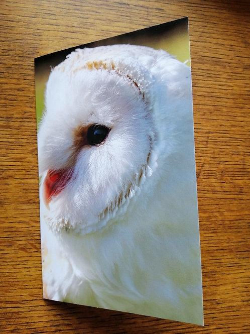 Bird of Prey - George