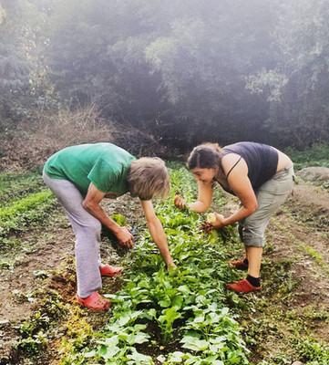 Cosechando la hortaliza