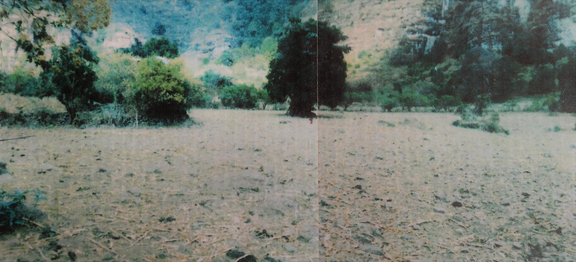 Rinconada del amate 1989