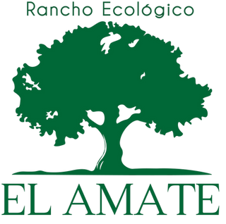 LOGO AMATE SF-01.png