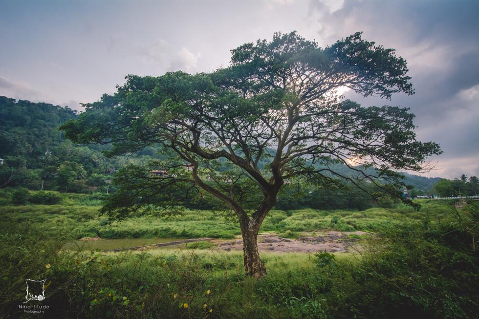 Sri Lanka-9.jpg