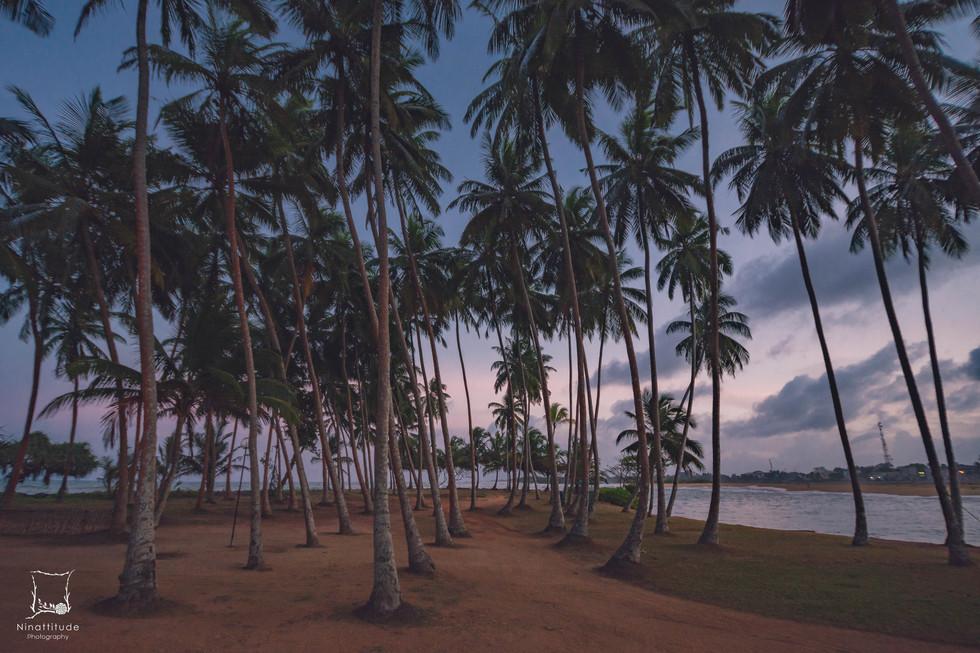 Sri Lanka-2.jpg