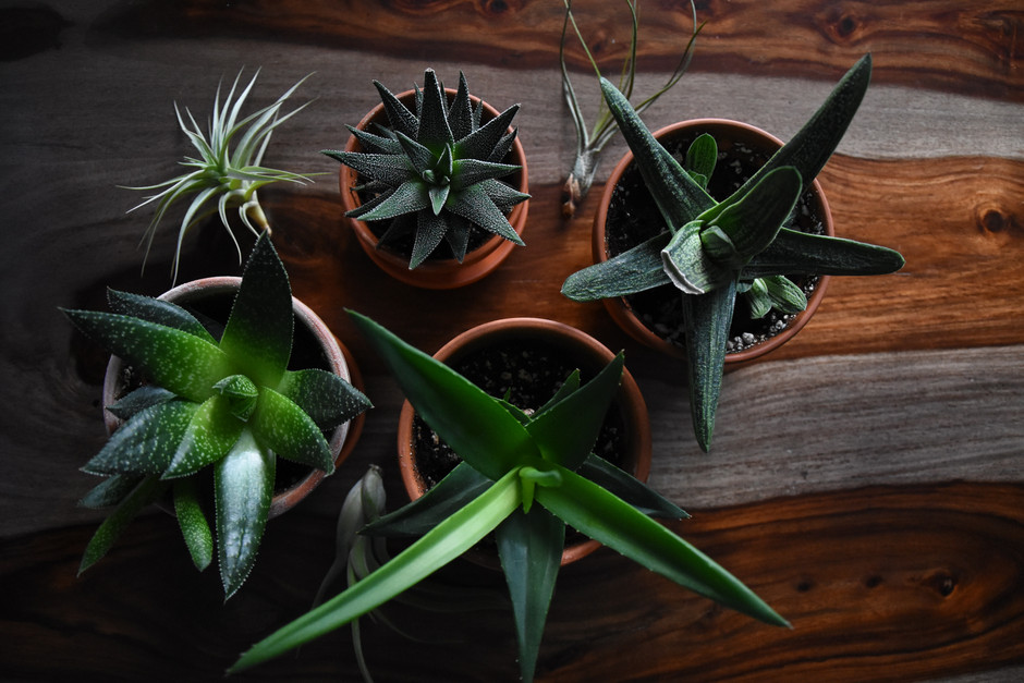 5 Totally Zen - Travel Inspired - Plants For Your Home