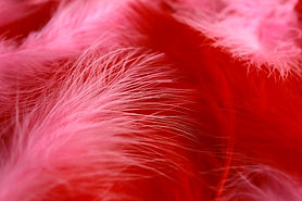 Background of red and pink fuchsia boa f