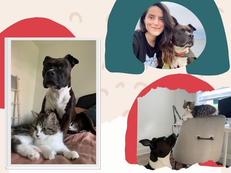 Empezar una nueva vida con tu mascota en Canadá