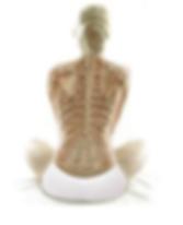 Visual of skeleton