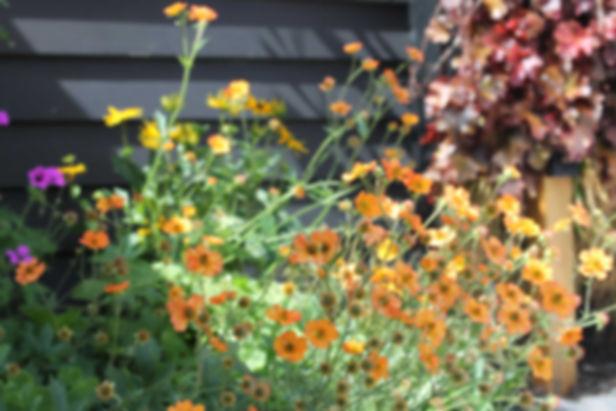 GardenBlackheath14.jpg