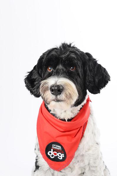 Ottawa Therapy Dog