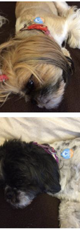 dogs with pet tags