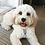 Thumbnail: Tap2Tag Pet Tag