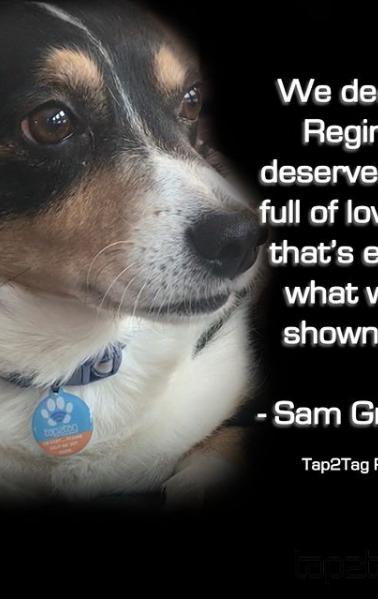 reginald with pet tag